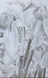 Snowdrops silverpoint