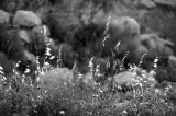 Grasses and rocks, La Salzadella