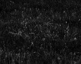 Grasses in late sunlight, Cap I Corp