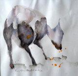 Shorn ewe