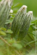 Crug plant