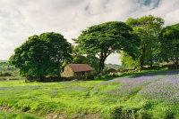 Bluebells Emsworthy Barn
