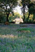 Gidleigh Park Pavilion Cottage with bluebells