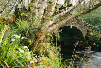 Primroses Hisley Bridge