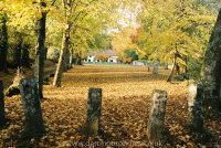 Manaton village green