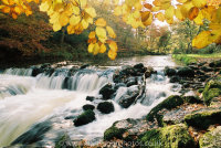 River Teign Weir and Salmon Leap