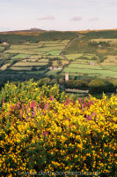 Widecombe heather and gorse