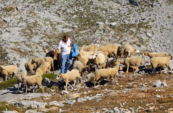 Shepherd in the Picos de Europa, Spain