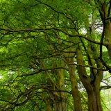 Lea Wood