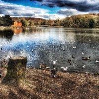 Rufford Park