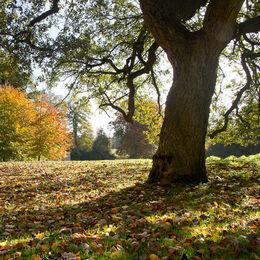 Autumn at Stowe Landscape Gardens