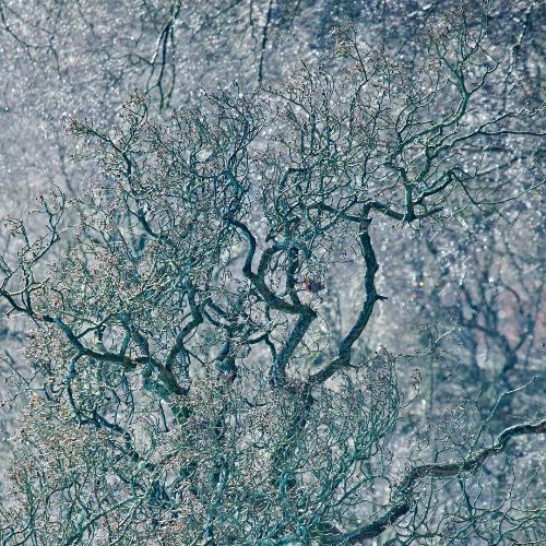 Cannock Chase Fine Art Winter Tree Series cc8073