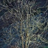 Cannock Chase Fine Art Winter Tree Series cc8082