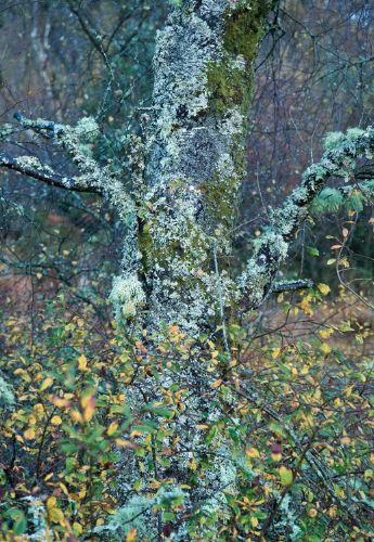 Trees WS 0972