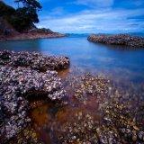 Waiheke Island Cove