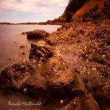 Waiheke Island Cove (2)