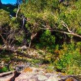 Broken Trees, Near Falls Gap