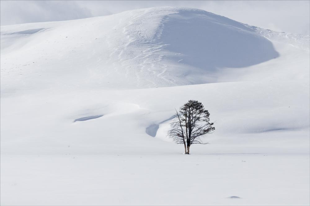 Alone Oak
