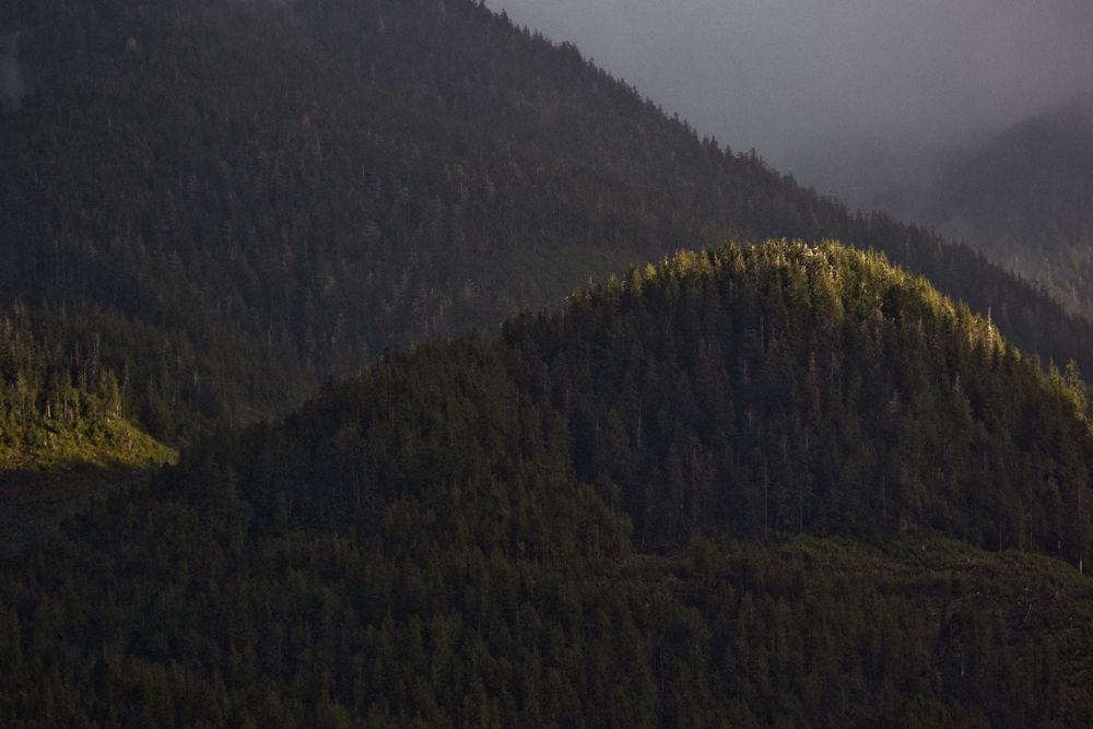Great Bear Forest light