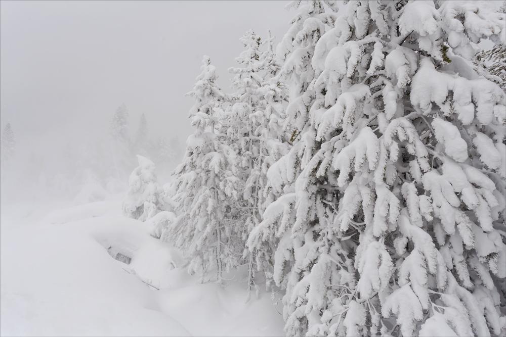 Norris snow
