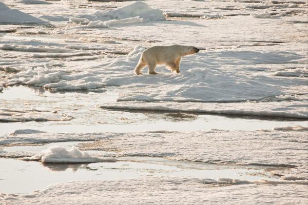 Polar Wilderness