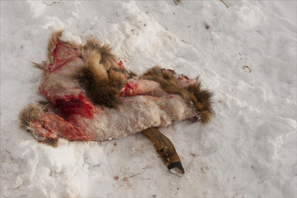 Wolf Kill