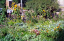 Organic garden, Leh