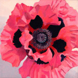Large Pink Oriental Poppy SOLD
