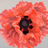 Large Coral Oriental Poppy SOLD