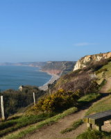 The cliff path, Beer, Devon.
