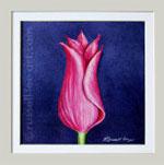 Aladdin Tulip - Original Watercolour (sold)
