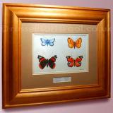 Butterflies - watercolour, framed