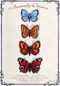 Butterfly Dreams - Print