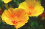 Californian Poppies - Limited Edition Print