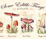 Some Edible Fungi - Print