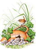 Jenny Wren - Watercolour original