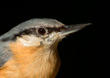 Birds of British Woods, Farms and Gardens
