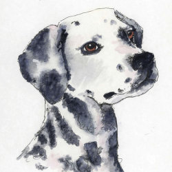 Spotty Dog sketch