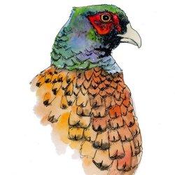 Pheasant sketch