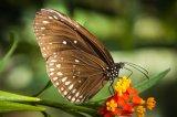 Butterfly Farm1
