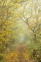 Shapely autumn
