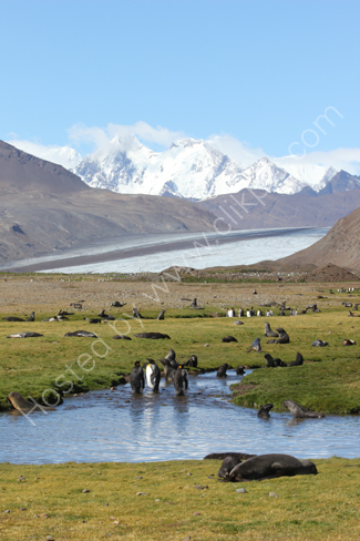Penguins & Seals