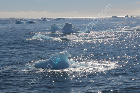Ice floes in Hope Bay