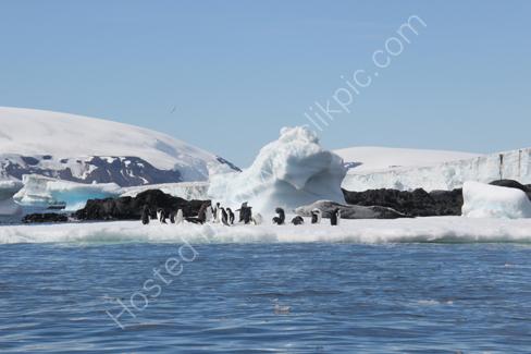 Leopard Seal & Adelie Penguins