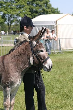 Donkey Winning a Show Class
