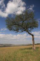 Landscape in the Serengeti