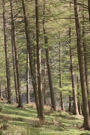 Woods in Derbyshire