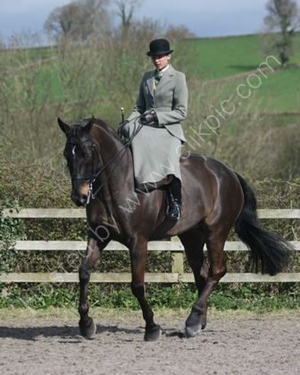 Showing Class Side Saddle