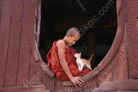 Novice Monk with Cat
