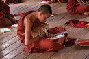 Novice Monk Studying with Cat